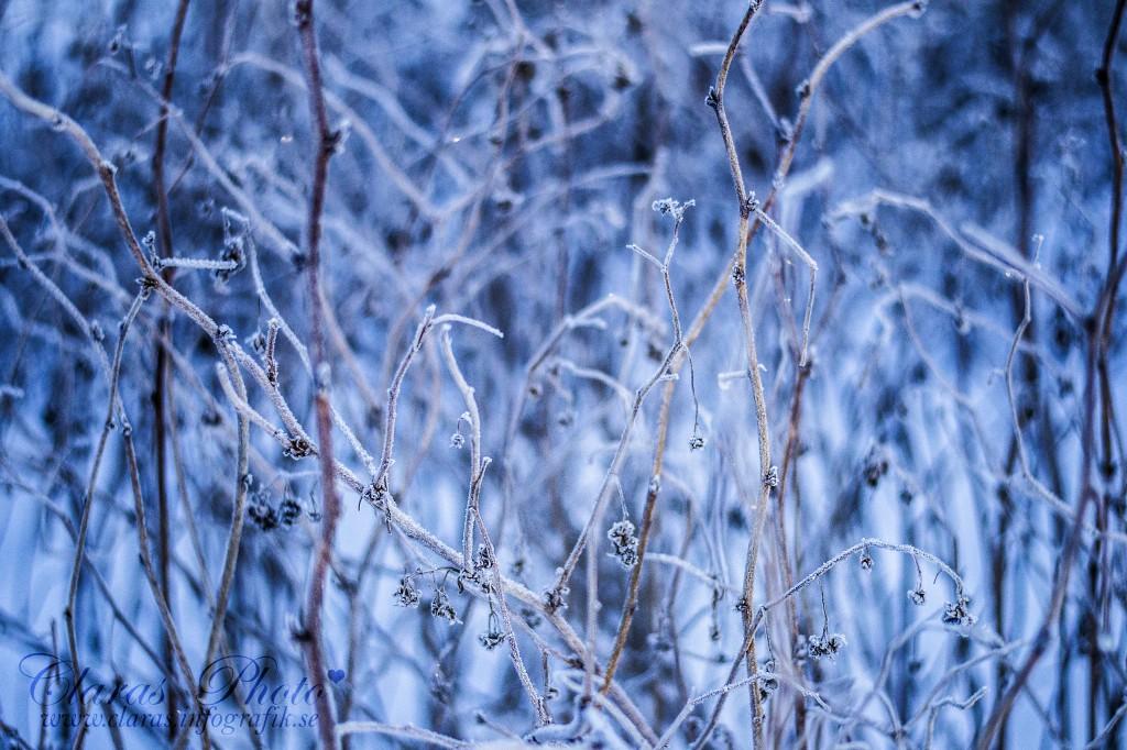 vinter bilder 044
